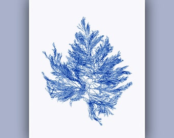 Sea fan, Blue Seaweed Print, Sea weed, Pressed seaweed Art, Victorian Botanical Art, Ocean Flowers, nautical Wall Decor, beach cottage decor