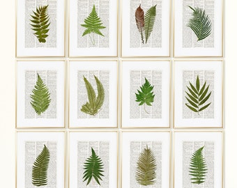 FERNS Dictionary Art Print Set, Botanical Prints, Fern Print, Fern Art, Fern Botanical Print, Vintage Botanical Wall Decor, Set Prints, #193