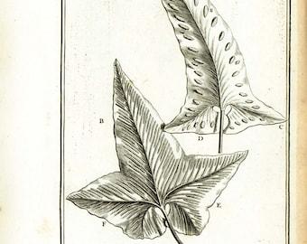 1797 Antique Fern Leaf Print, Botanical wall art,