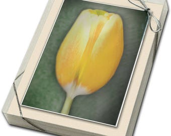 Tulips -- Boxed set of 4 different colors