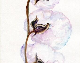 Original Watercolor painting of Cotton Bolls  9 x 12 cotton painting, cotton art,  Farmhouse Decor