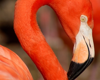 Flamingo, Part for Whole (Set of 8 Note Cards)