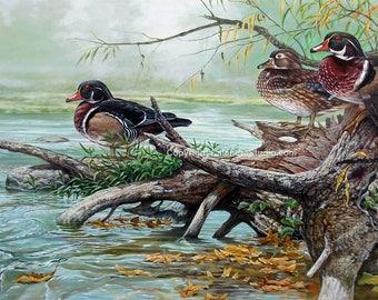 River Raisin Wood Ducks