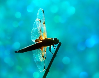 Nature Photography, Dragonfly, Bokeh, Wings,Sparkly,Aqua, Teal, Wall Decor