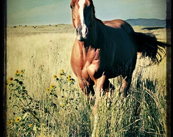 Horse Photography, horse photograph - 8x8 horse fine art, portrait photo, landscape, nature print