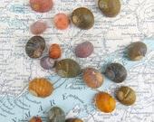 Irish Sea Shells Seashells Beach Shells from Ireland Shells Craft Shells Shells for Crafts or Jewellery Jewelry Making