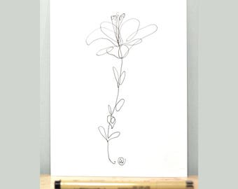 Black Line Flower Drawing : More coloring sheets i ve designed colored pencil drawings