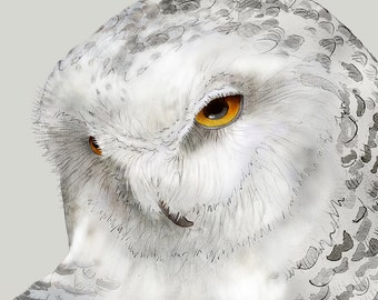 Snowy Owl 12 signed fine art print 9x12 Bird lover gift Nature