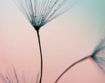 Dandelion photography, dandelion wall art, dandelion print, large wall art, macro, fine art print, nature, blue, pink, nursery, wall decor