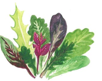 Mild Mix of Salad Greens, Urban Harvest Certified Organic Seeds