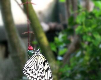 "8"" x 10"" Butterfly Photograph"