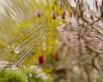 Spring photograph taken with the Lensbaby Muse, A4 size