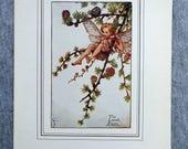 Larch Flower Fairy Vintag...