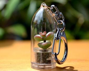 Live Succulent Keychain // Baby's Necklace Succulent Terrarium Keychain
