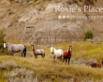 Horses in the badlands//North Dakota wild horses// Wild Horse print// horse photography//Horse print//wildhorse art