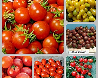 Best Cherry Tomato Collection Heirloom Garden Seed Non-GMO 5 Packets Red Yellow Black Open Pollinated Gardening