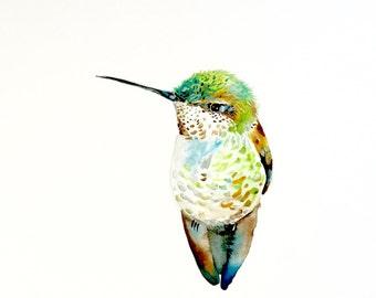 """Humming Bird Print, Giclee Print, 8""""x10"""""""