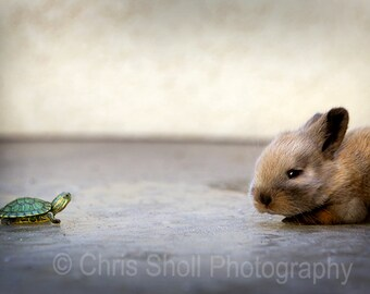 Tortoise & the Hare , Fine Art Photography, Nature, Animals, PRINT OR CANVAS