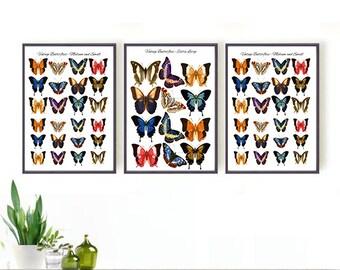 Vintage Butterflies Digital Download | Printable Set of 3 | 8x10