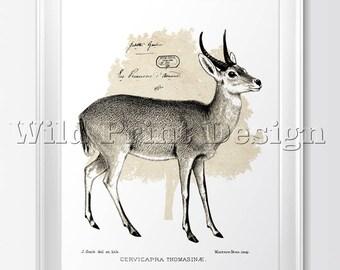 Vintage Goat illustration, Instant Download Printable Art, Vintage Transfer, Digital Collage Sheet  #0014