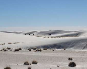 White Sands Desert