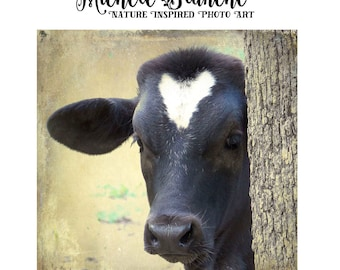 Baby Cow Calf With White Heart Love Cows Cow Peeking Behind tree Black Cow White Heart Square Photo