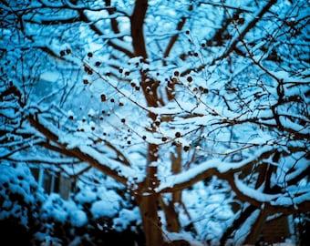 Winter Bloom (2012)