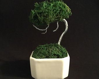 Wired Bonsai Moss And Wire Deadwood Bonsai Tree