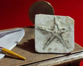 Dollhouse miiature find  fossil