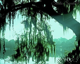 "Nature Photography, Tree Photo, Lake Photograph, Landscape Print, Florida, Turquoise Art, Sunrise, Dreamy Nature Art-""Spanish Moss Daydream"""