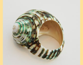 SNAIL SHELL RING - Oceanic Shell Ring, From Papua New Guinea