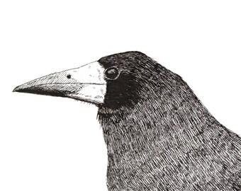 Bird Art Print Pen and ink drawing of a Rook (Giclée Print)