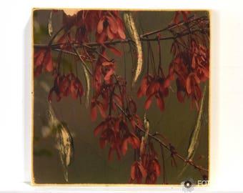 8x8 Asian Fusion Wall Art: Fall Maple Tree Photo Transfer Art on Wood, zen garden photography