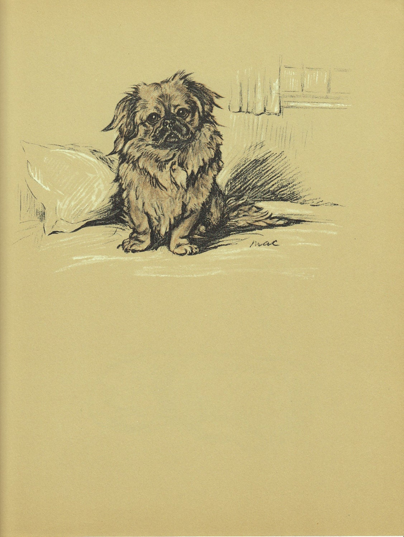 PEKINGESE Dog Print 1930s Lucy Dawson Pet Portrait Wall
