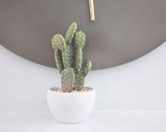 Cactus, Artificial Cactus, Cactus Pot, Fake Plants, Gift idea, for Home Decor, Wedding Favors and More