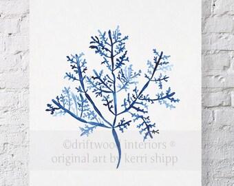 Sea Fern III in Denim Print 8x10 - Sea Life Art Print - Coral Art Print - Blue Coral Print - Seaweed Giclee Print - Marine Life Print