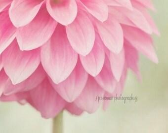Dahlia Photography Print, Dahlia Print, Shabby Chic Print, Pink and Green Art, Pink Flower Art, Dahlia Wall Art, Pink and Mint Nursery
