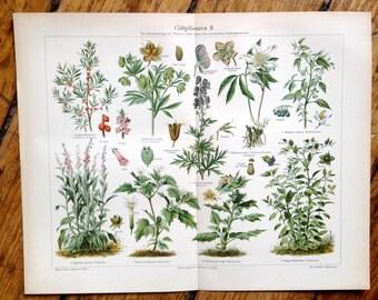 1894 POISONOUS PLANTS original antique botanical print LITHOGRAPH