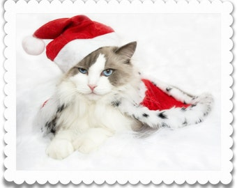 Commercial Use Electronic Download Card - Cat Dressed cat in red hat and red cape -  cat card download
