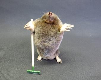Taxidermy Gardening Mole (log no:222) Holding A Garden Rake. Height 10cm. Small Mammal.