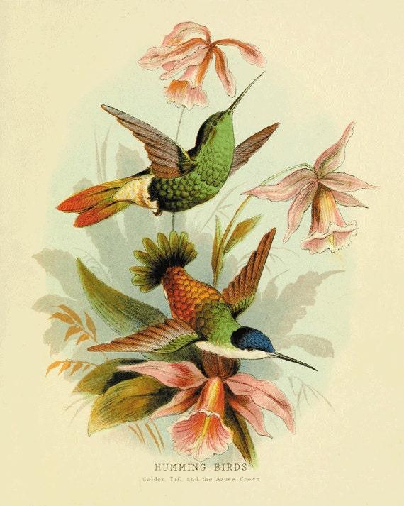 Hummingbirds wall decor Bird art print Antique wall art nature