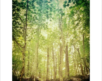 8 x 10 Kentucky Forest Wonderland photo print