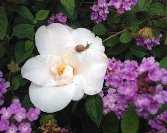 Tiny Snail on Flower