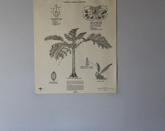 Vintage Fossil Seed-Ferns and Ferns of the Great Coal Age classroom chart from Turtox