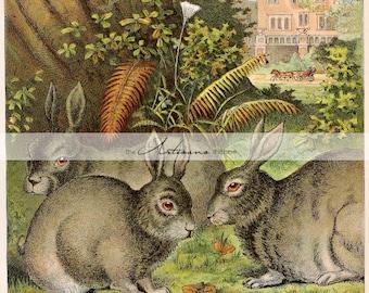 Digital Download Printable Art - Antique Rabbits Art Illustration - Paper Crafts Scrapbooking Altered Art - Renaissance Art Rabbits Acorns