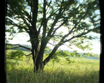 Tree in Meadow 8x8 Print