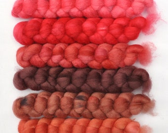 Hand dyed roving -  Blue Faced Leicester (BFL) wool spinning fiber - 6.5 ounces - Crab Claws