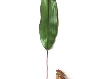 Artificial Pitcher Plant Pick|Artificial Nepenthes|Artificial Flower|Artificial Leaves|Silk Flowers|Flux Flowers|Artificial Floral Bunch|