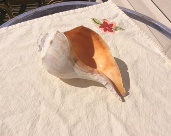 Large Conch Sea Shell, Coral Peach Color Accents, Japan Souvenir  Cottage Beach House, Knobbed Whelk Sea Shell, Ocean Nautical  Decor