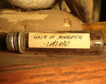 Sasquatch hair preserved in glass
